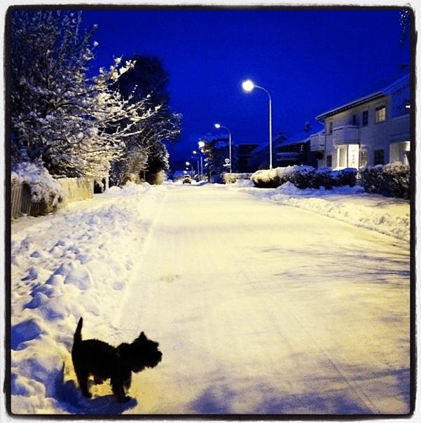 tur-vinter